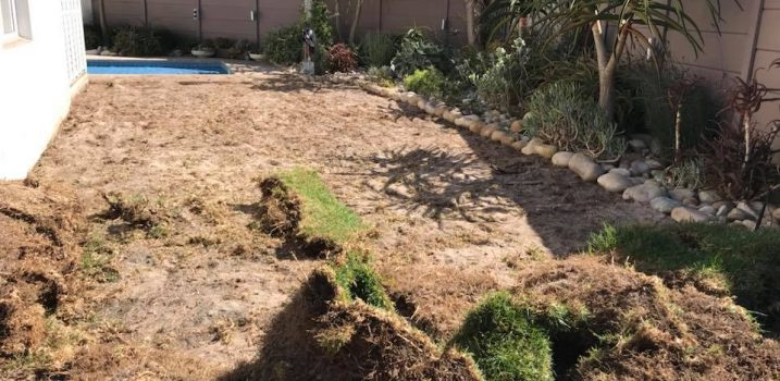 artificial lawn - before